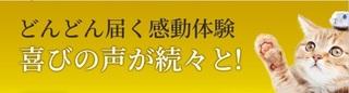 14-獣医師推奨の猫用「毎日爽快」-口コミ.jpg