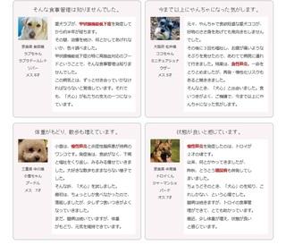 17-犬心-購入.jpg