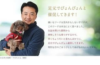 3-カナガンドッグフード-.jpg