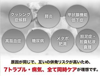 5-犬心-ドックフード.jpg