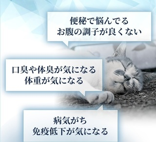 5-獣医師推奨の猫用「毎日爽快」-猫.jpg
