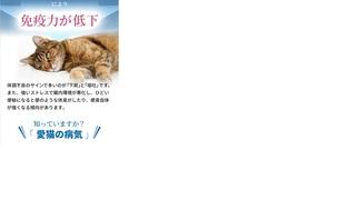 7-獣医師推奨の猫用「毎日爽快」-毎日爽快.jpg